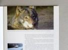 """Broszura A4 """"Zwierzęta i drogi"""" – druk ekologiczny – Bielsko-Biała"""