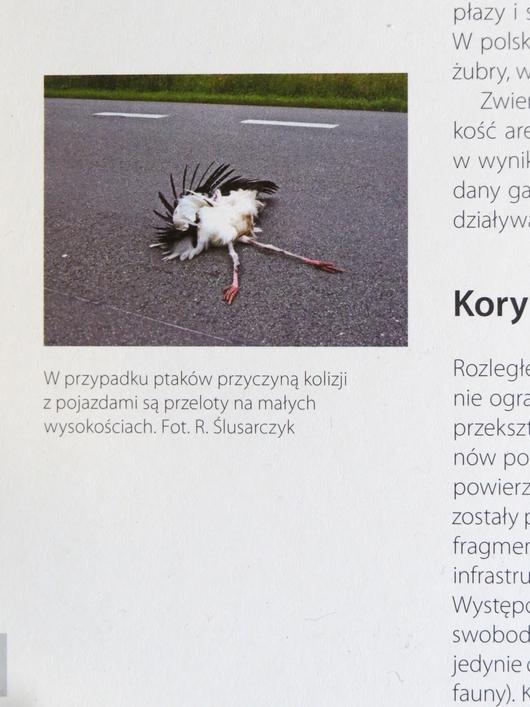 Papier ekologiczny bielsko-biała katalog drogi i zwierzęta