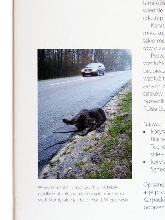 Papier ekologiczny broszura zwierzęta i drogi bielsko-biała